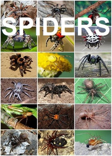 Top 10 Interesting and Fun Facts About Spiders   Owlcation