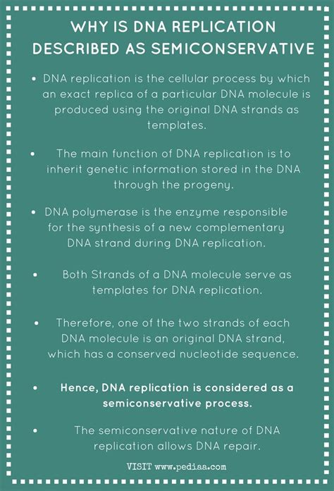 Why is DNA Replication Described as Semiconservative